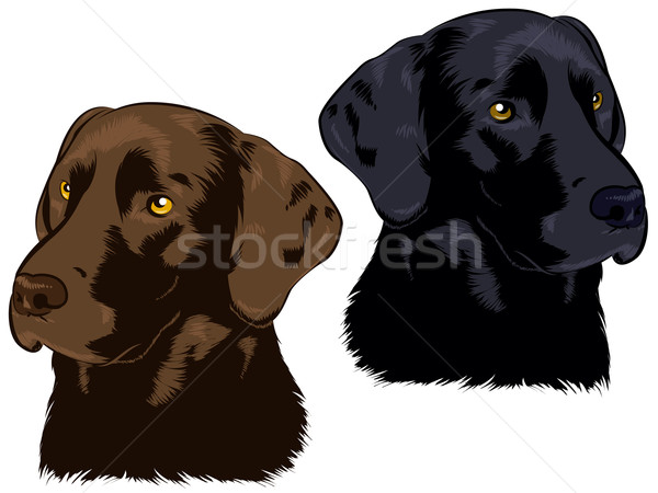 Chocolate and Black Labs Stock photo © gleighly