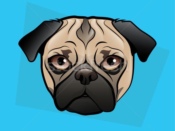 犬 顔 青 目 背景 芸術 ストックフォト © gleighly