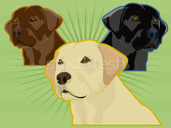 ラブラドル 犬 ラブラドル·レトリーバー犬 実例 セット デザイン ストックフォト © gleighly