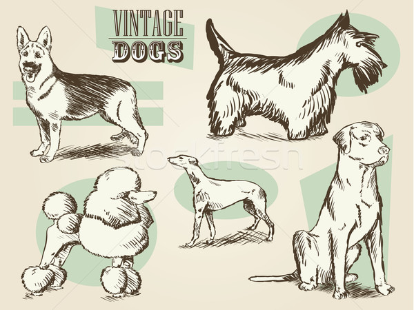 Vintage Dog Etchings Stock photo © gleighly