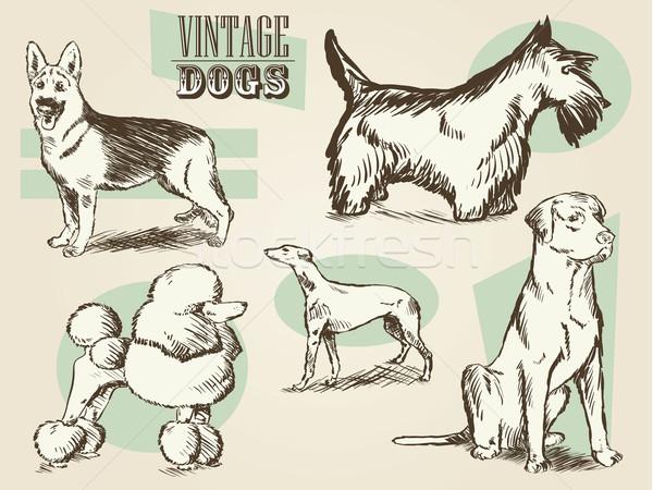 ヴィンテージ 犬 レトロな コレクション ストックフォト © gleighly