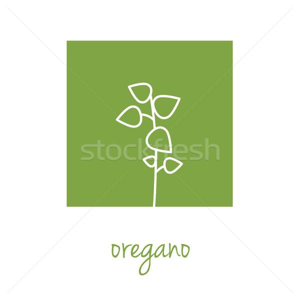 Oregano ikon zöld tér felirat főzés Stock fotó © glorcza