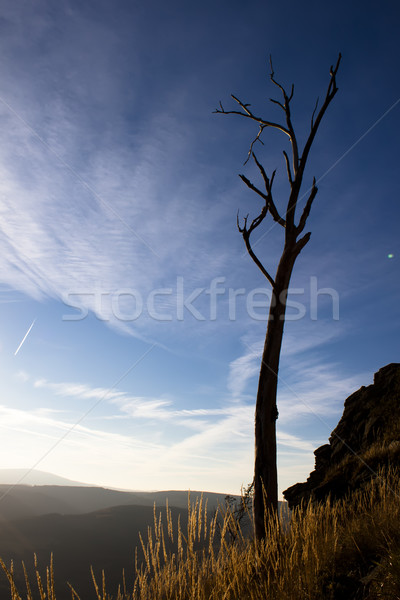 Estranho árvore madeira natureza montanha rocha Foto stock © glorcza