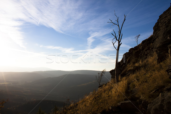 Tuhaf ağaçlar ahşap doğa dağ sonbahar Stok fotoğraf © glorcza