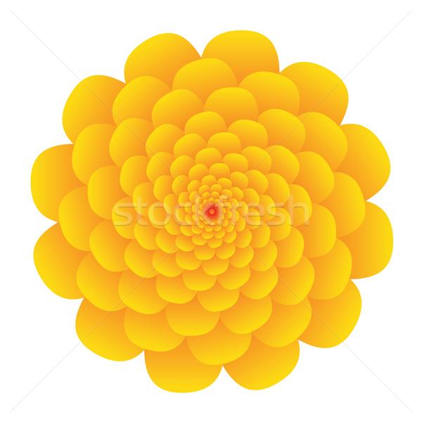 желтый цветок большой белый весны солнце природы Сток-фото © glorcza