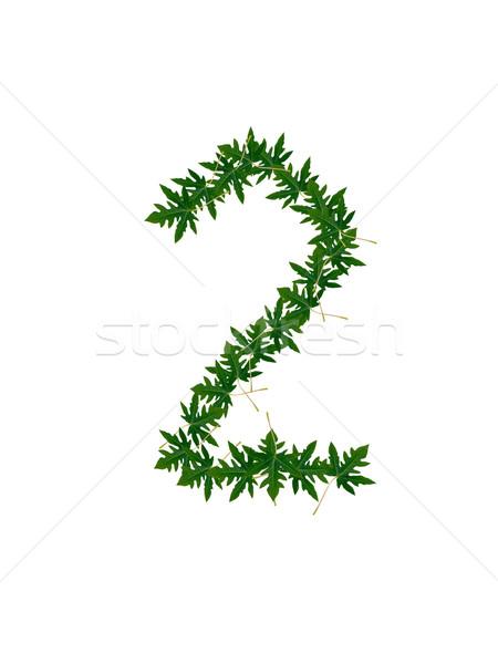 Número folhas verdes árvore grama escolas natureza Foto stock © Gloszilla