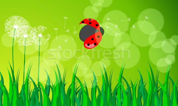 Gyönyörű zöld tavasz legelő pitypangok katicabogár Stock fotó © glyph