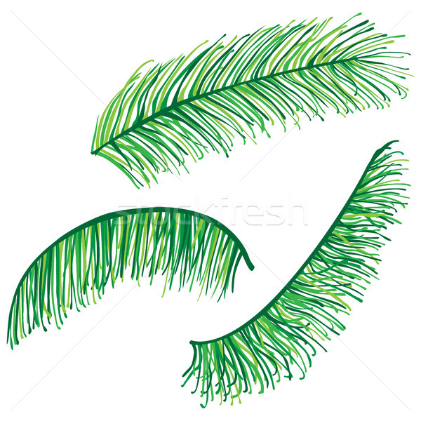 Set of highly detailed palm leaves Stock photo © glyph