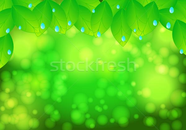 Schönen grünen Natur Blätter Wassertropfen Wasser Stock foto © glyph