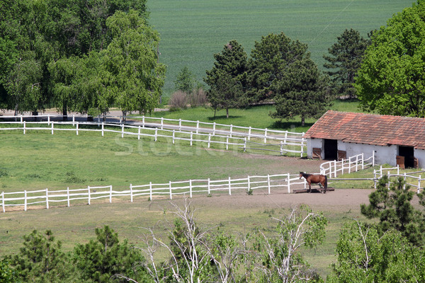 farmland with corral and horse aerial view  Stock photo © goce