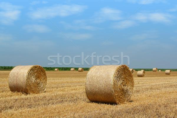 Słomy dziedzinie niebieski Chmura kraju zbiorów Zdjęcia stock © goce