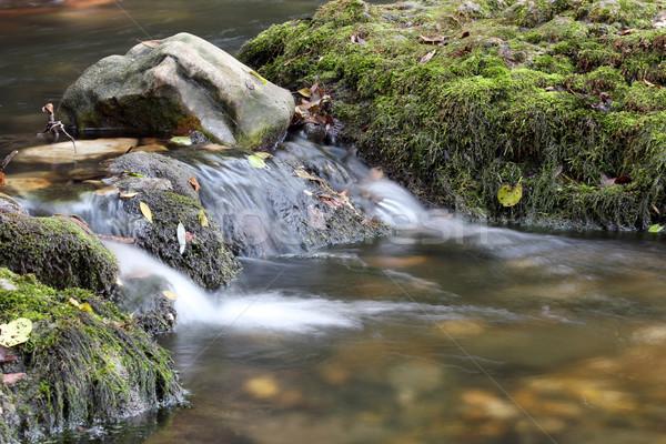 Enseada natureza cena folha montanha verão Foto stock © goce