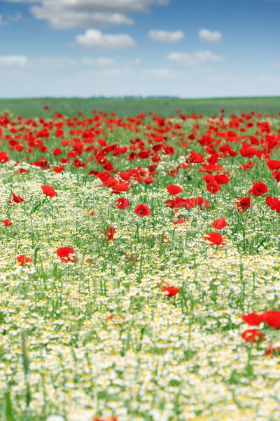весны луговой Полевые цветы Blue Sky пейзаж лет Сток-фото © goce