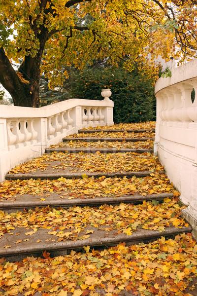 stone staircase and fallen leaves autumn season Stock photo © goce