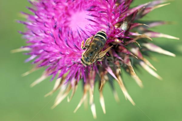 Abelha flor primavera temporada natureza verão Foto stock © goce
