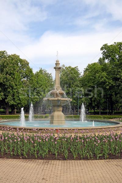 парка фонтан Tulip цветы Венгрия небе Сток-фото © goce