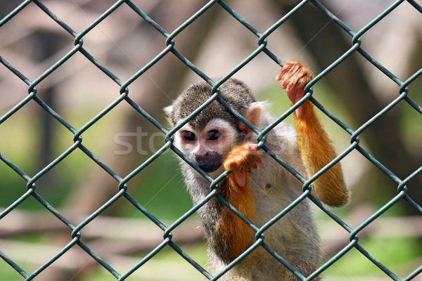 Triste peu singe captivité nature cheveux Photo stock © goce