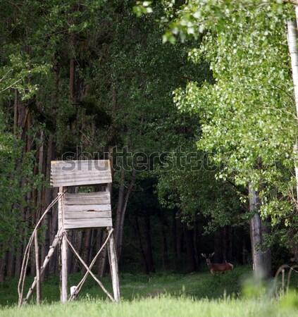 Veado torre floresta natureza árvores verde Foto stock © goce