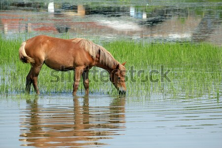 brown horse and foal nature spring scene Stock photo © goce