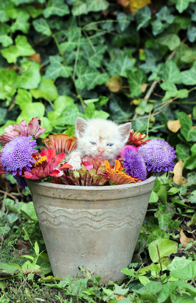 Stock photo: cute kitten in a vase with flowers