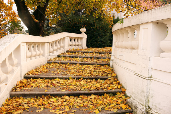 stone staircase with colorful fallen leaves autumn season Stock photo © goce