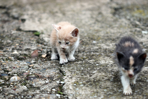 two abandoned kittens  Stock photo © goce
