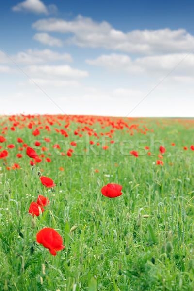 Primavera flores silvestres pradera paisaje naturaleza verano Foto stock © goce