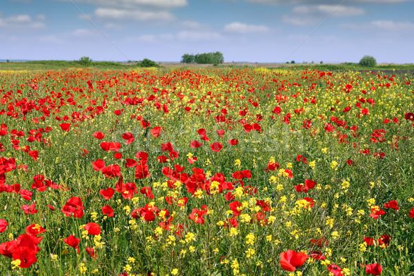 Полевые цветы луговой пейзаж весны сезон лет Сток-фото © goce