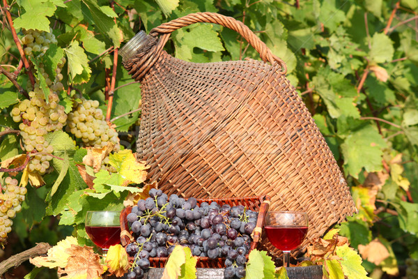 red wine autumn scene Stock photo © goce