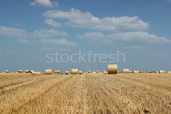 agriculture field with straw bale Stock photo © goce
