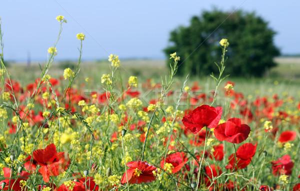 Primavera prado flores silvestres árvore natureza verão Foto stock © goce