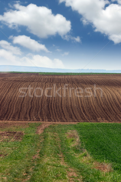 brown and green plowed field landscape  Stock photo © goce