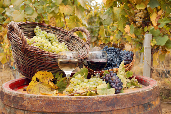 red and white wine autumn season Stock photo © goce