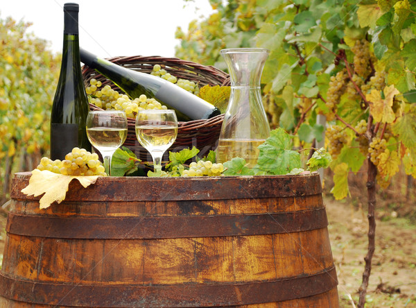 vineyard with white wine and bottles Stock photo © goce