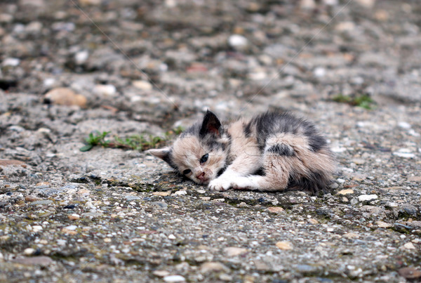 abandoned kitten lying on the ground  Stock photo © goce
