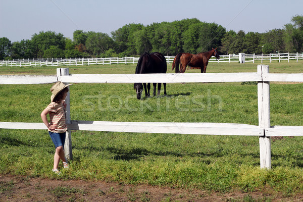 Zdjęcia stock: Piękna · dziewczynka · oglądania · konie · dziewczyna · dziedzinie