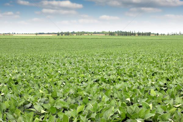 soya bean field landscape agriculture Stock photo © goce