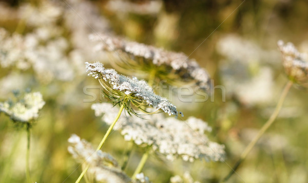 meadow spring season nature background Stock photo © goce