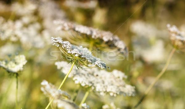 Legelő tavasz évszak természet fű nyár Stock fotó © goce