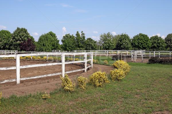 ранчо белый лошадей области фермы забор Сток-фото © goce