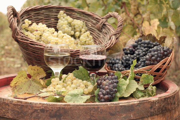 red and white wine autumn season Stock photo © goce