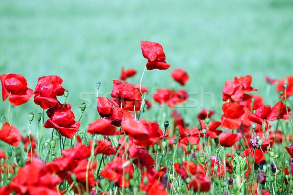 Primavera temporada flor paisagem Foto stock © goce