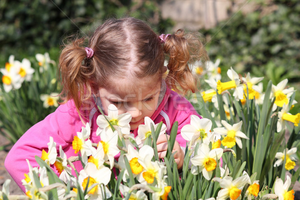 little girl smell flower Stock photo © goce