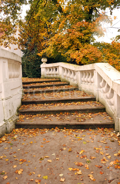 fallen leaves on stone staircase autumn season Stock photo © goce