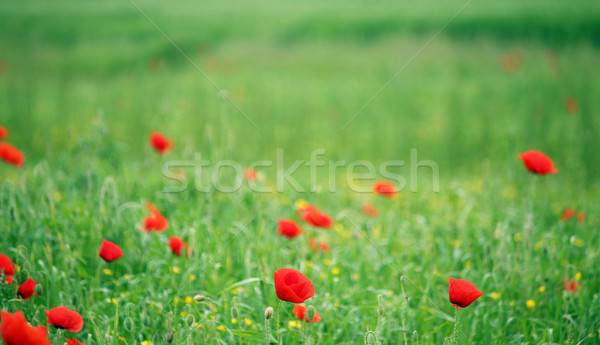 fresh red puppy meadow - photo #12