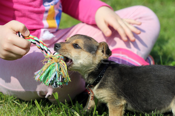 happy puppy and child play with rope Stock photo © goce