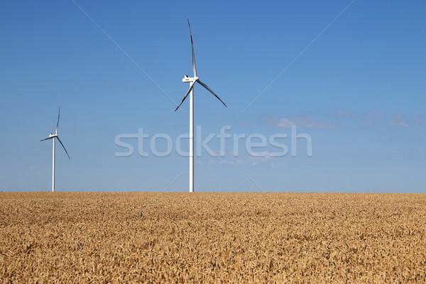 wind turbines on wheat field summer season Stock photo © goce