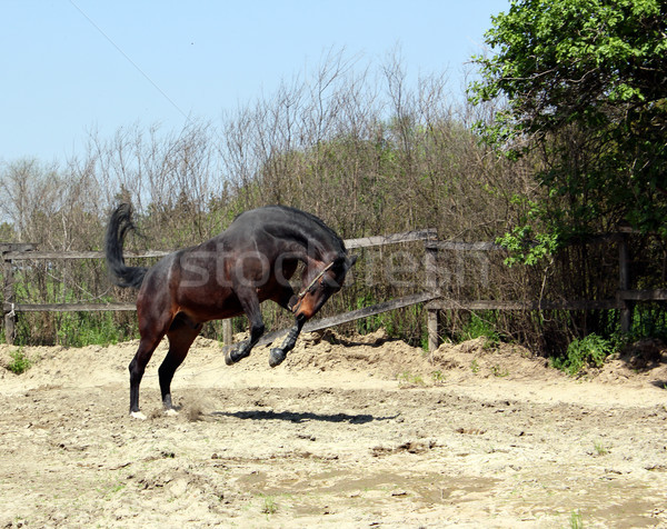 powerful horse running and jumping Stock photo © goce