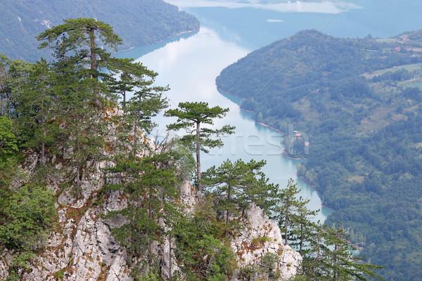 pine trees on Tara mountain landscape Stock photo © goce