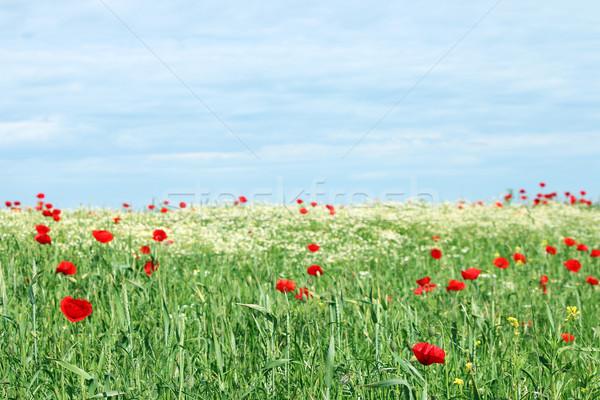 springtime meadow with wild flowers landscape Stock photo © goce